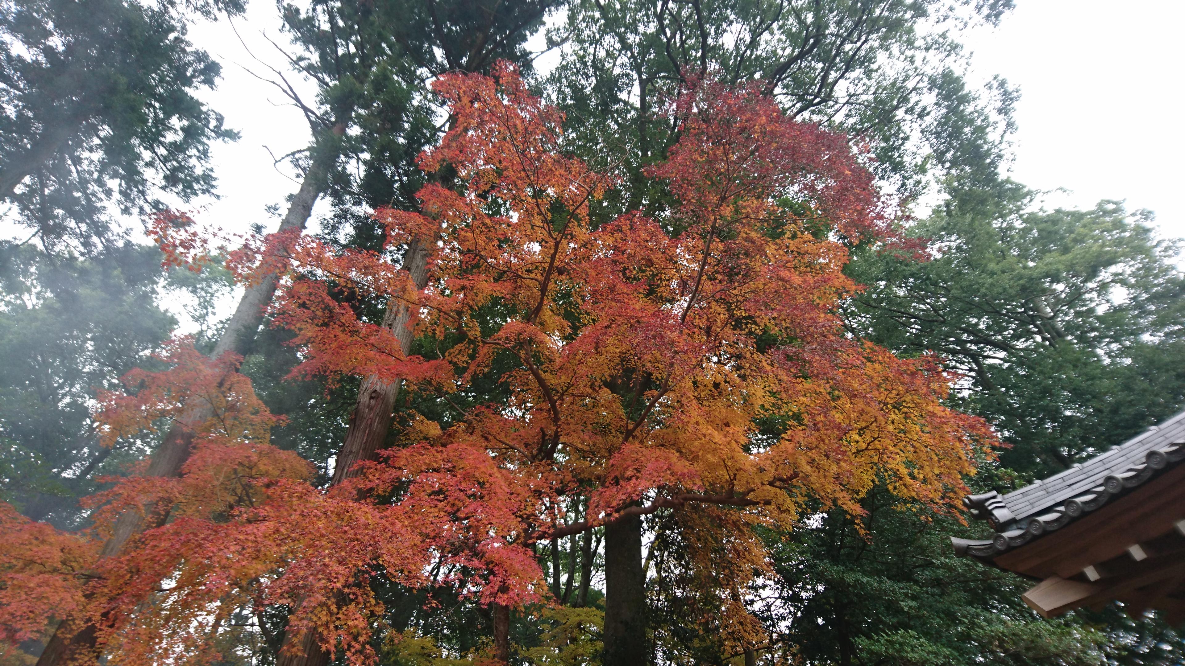 紅葉が見頃の季節です